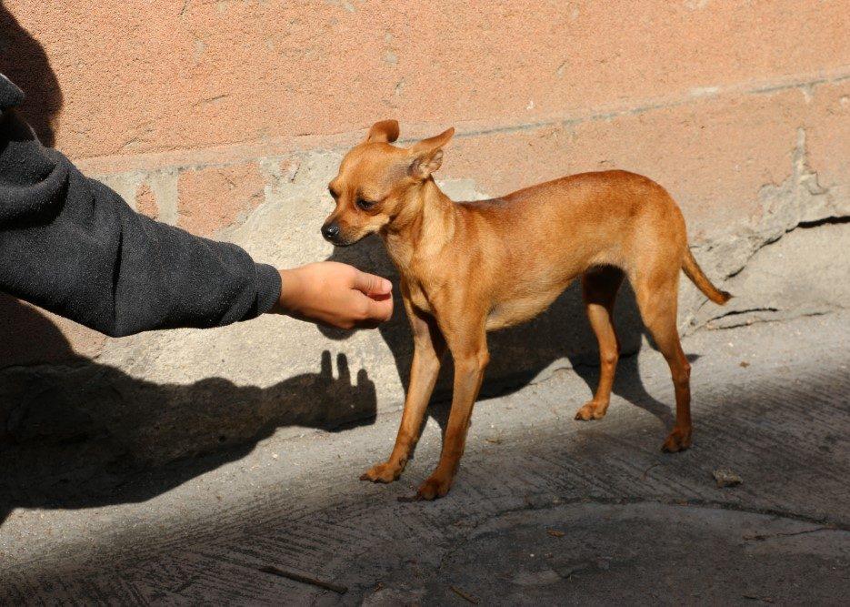 DOG_Istanbulian_Dog_003_Photo_2019 (Custom)